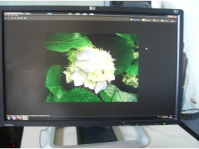 HP Monitor Hstnd-2421-A Lcd-Tft  24inca