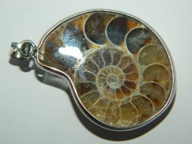 Privezak Ammonite fosil